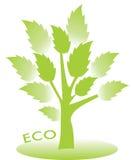与绿色叶子的Eco树 免版税库存图片