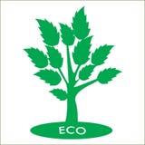 与绿色叶子的Eco树 库存照片