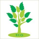 与绿色叶子的Eco树 免版税库存照片