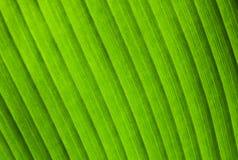 与绿色叶子纹理的自然宏观照片背景 库存照片