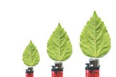 与绿色叶子,烧伤概念的打火机 库存图片