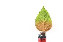 与绿色叶子,烧伤概念的打火机 库存照片