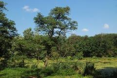与绿色叶茂盛树的秋天风景 免版税库存图片