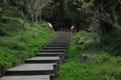 与绿色叶茂盛森林的向上楼梯在台湾 库存照片