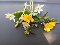 与黄色和橙色花的明亮的春天背景 免版税库存照片