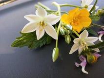 与黄色和橙色花的明亮的春天背景 库存图片