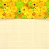 与黄色和绿色大丁草花的卡片 向量EPS-10 免版税库存照片