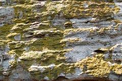 与绿色地衣的岩石 免版税库存照片