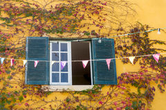 与黄色墙壁和上升的植物的Vindow视图 免版税库存照片