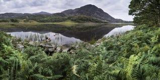 与绿色夏天叶子和河的美好的山风景 免版税图库摄影