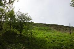 与绿色多汁草的小山在早期的春天 免版税库存图片