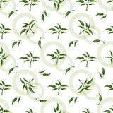 与绿色小树枝的无缝的样式 皇族释放例证