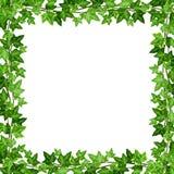 与绿色常春藤叶子的框架 也corel凹道例证向量 免版税库存图片