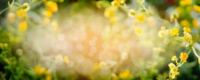 与黄色庭院或公园的被弄脏的夏天自然背景开花,横幅 免版税库存图片