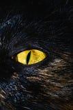 与绿色斑点的黄色猫` s眼睛 宏指令 免版税库存图片