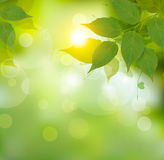 与绿色春天叶子的本质背景 库存图片