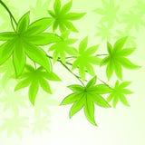 与绿色春天叶子的自然传染媒介背景 免版税库存照片