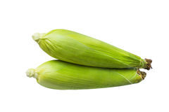 与绿色果皮的甜玉米 图库摄影