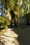 与绿色树和植物的自然岩石洞形成 库存照片