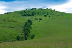 与绿色树和草甸,在蓝天的白色云彩的小山 库存照片