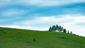 与绿色树和草甸,在蓝天, A的白色云彩的小山 库存照片