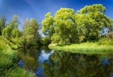 与绿色树的夏天风景和河 免版税库存照片