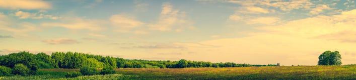 与绿色树的大草原风景 免版税库存图片