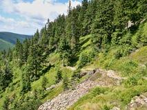 与绿色树的山小山 库存图片
