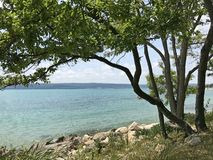 与绿色树的狂放的海滩 库存图片