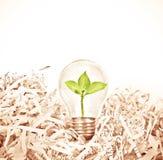 与绿色树的电灯泡在切细的被回收的pap的地方里面 图库摄影