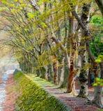 与绿色树的走道车道在公园 库存照片