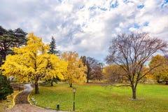 与黄色树的金黄秋天 免版税库存图片