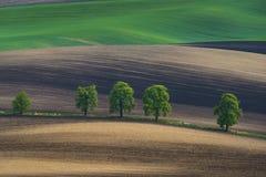 与绿色树的Moravian波浪领域 免版税库存照片