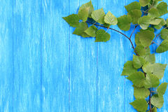 与绿色桦树叶子的蓝色木背景 免版税库存照片