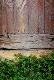 与绿色植物的困厄的木门在托斯卡纳 免版税库存照片