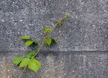 与绿色植物的墙壁背景 免版税库存图片