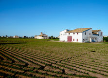 与绿色植物的大领域在巴伦西亚,西班牙 农厂房子和果树园 蔬菜栽培 平安的地方在强烈的蓝天下 图库摄影