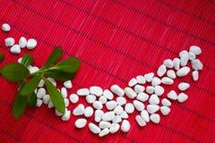与绿色植物的白色石头 免版税库存图片