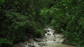 与绿色植被的山小河风 影视素材
