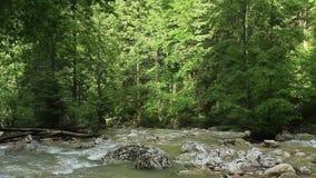 与绿色植被的山小河 股票录像