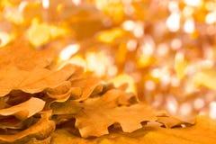 与黄色橡木叶子的抽象背景 图库摄影