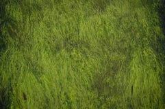与绿色海草的水下的抽象背景 免版税库存照片