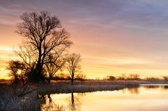 与黄色灼烧的云彩的日出在树包围的一个狂放的池塘在秋天早晨 免版税图库摄影