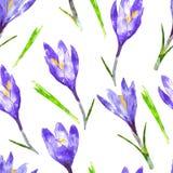 与紫色番红花花和绿色的水彩无缝的样式 图库摄影