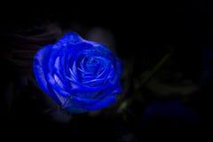与绿色的一朵蓝色玫瑰在黑暗的背景离开 图库摄影