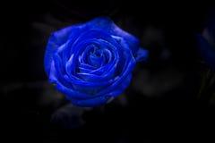 与绿色的一朵蓝色玫瑰在黑暗的背景离开 免版税图库摄影