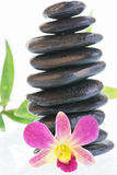 与黑色的五颜六色的石斛兰属兰花向特写镜头扔石头 库存图片