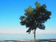 与绿色的偏僻的树在海岸离开 免版税库存照片