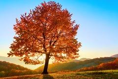 与黄色的偏僻的豪华的树离开与太阳走路 免版税库存图片