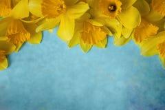 与黄色的惊人的难看的东西背景开花在绿松石纹理的黄水仙 美丽的五颜六色的贺卡为 库存照片